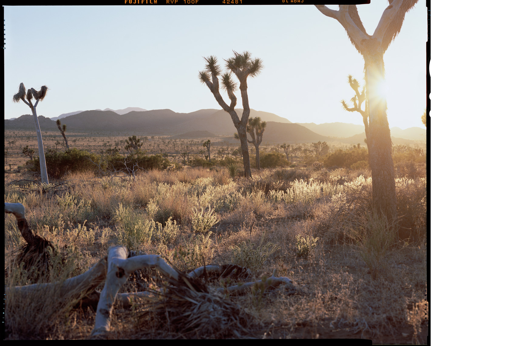 4x5_JoshuaTree_Sunset_WEB.jpg